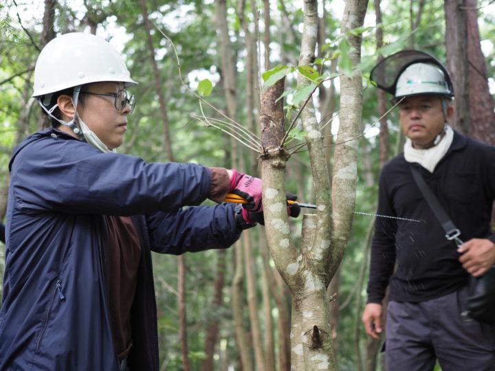 小径木の伐採