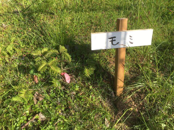 学内に植栽した樹木に看板を立てた