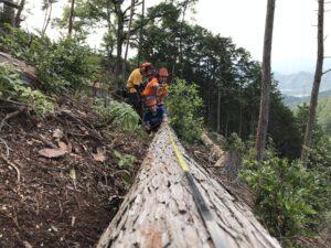 木の長さを測っている